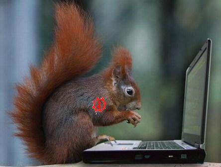 squirrel-hacker