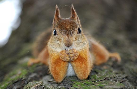 cute-squirrel